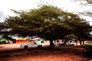 Car-tree-playground-03