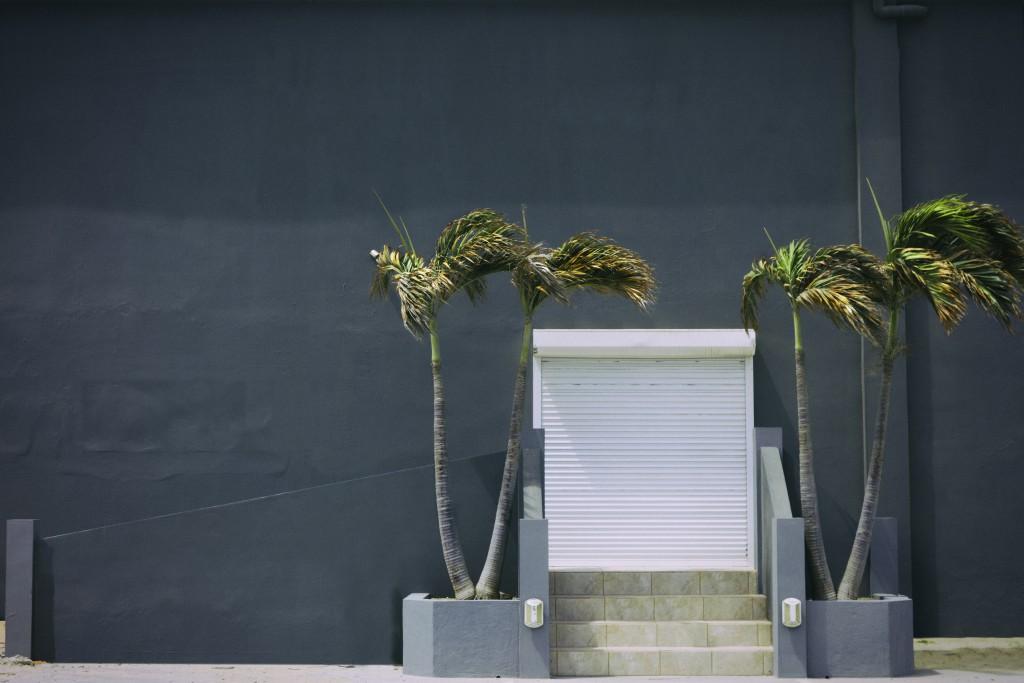 Palm entrance
